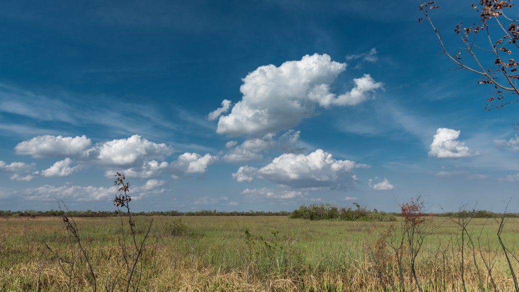 A photograph of cumulus clouds (Cu) over Everglades National Park in Florida