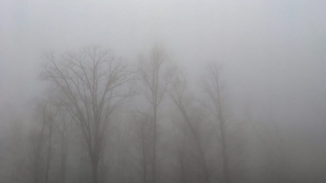 A photograph of stratus nebulosus clouds (St neb) in a forest