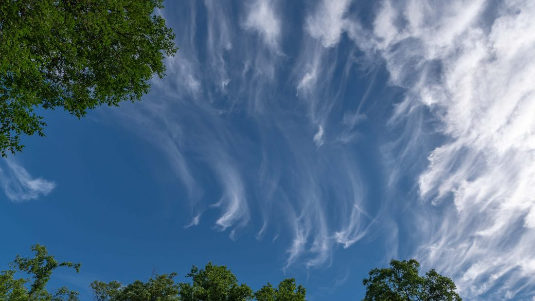 A photograph of cirrus uncinus clouds (Ci unc) and cirrus floccus (Ci flo) over some trees