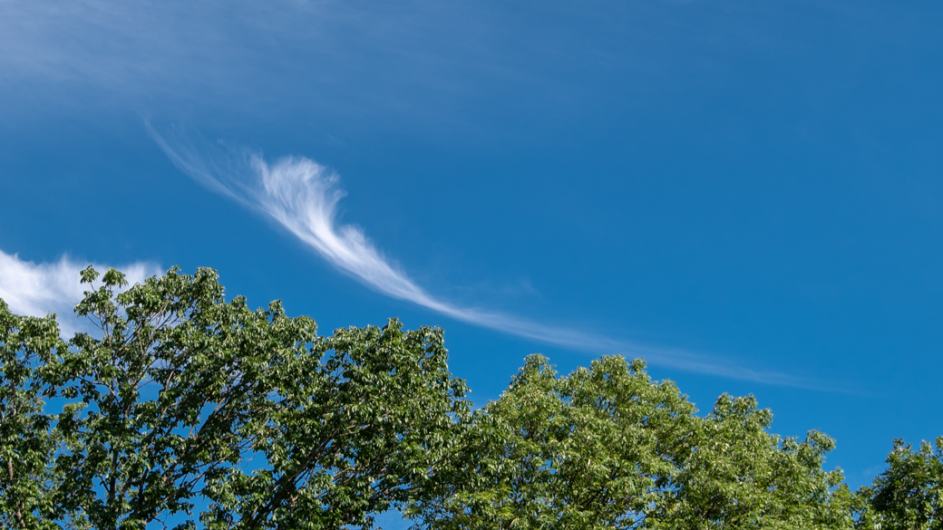 A photograph of a cirrus uncinus cloud (Ci unc) over some trees